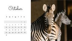 Wild Animals in natural habitat