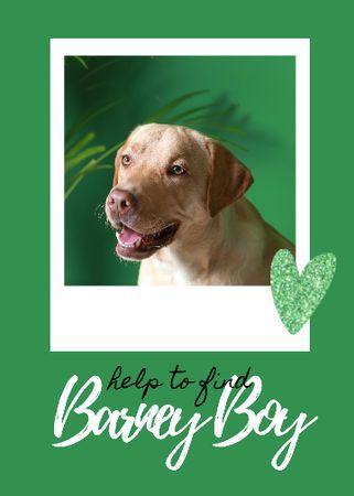 Lost Dog information with cute Labrador Flayer – шаблон для дизайну