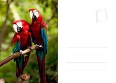 Ara birds in jungle